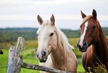 Magnificent Horses / by Karen Steele
