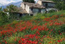 Italy / by Karen Steele
