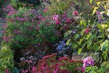 English Country Garden / by Karen Steele