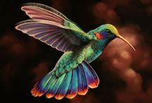 Hummingbirds / by Karen Steele