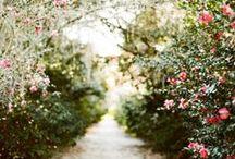 Garden / by Kelly Oshiro // SB Chic