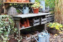 Garden Organization / by Constanze List