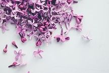 Lilac / a favorite hue. simple, sweet, and timeless.
