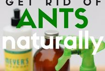 Useful Tips & Tricks / How to's as well as hidden uses in household products we use everyday.