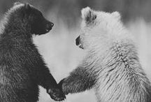 furry friends / by Hannah Ingebrand