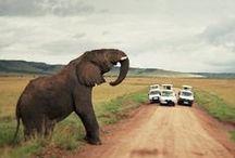 Wanderlust / Helping Wildlife