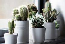 Flowers/Cactus