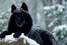 Wölfe und ähnliches