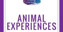 Animal Experiences / Do you love seeing animals when you travel? Here's a selection of amazing wildlife experiences and animal encounters all around the world. All animal-friendly experiences and responsible tourism. Check out these for animal volunteering opportunities. Includes swimming with sharks, Komodo dragons in Indonesia, Snow monkeys in Japan, African safaris, Whale watching in New Zealand, King Penguins in Chile & more of your favourite animals. #Animals | #Wildlifeexperiences | #ethicalanimalexperiences