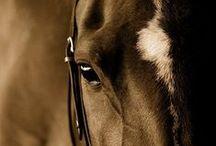 HORSES / Jeździectwo, konie