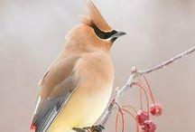 Bird - Photos