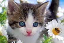 sunshower kitten snuggles