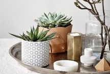 Succulents: Container Gardening / succulent containers, planters / by Esther Lee Jewelry