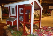 Chicken Coops / by Joy Comeau