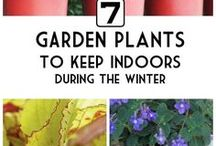 Creative Gardening / Gardens, yards, and outdoor inspiration at its best.