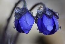 Beautiful Botanicals / by Joy Comeau
