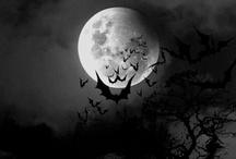 Batty for Bats / by Joy Comeau
