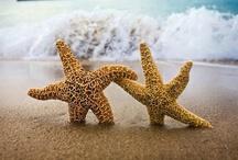 Starfishing / by Joy Comeau
