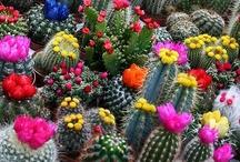 Cactus Garden / by Joy Comeau