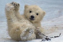 """Bear"" with Me / by Joy Comeau"