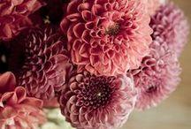 <3 Flowers & Plants  / by Kimberly Berard