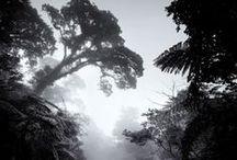 +Nature