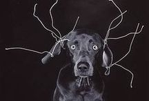 Doggy Dog / Men's best friend.