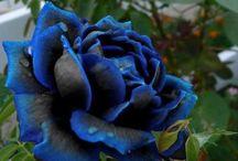 Flowers (Gorgeous) / Rare, Beautiful, Unique  / by Deanna Lopes
