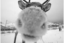 Winter Wonderland / by Kristin Nicole Elliott