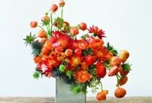 centerpieces / by pot & box