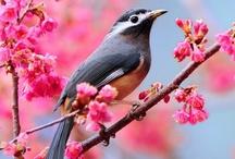 Subject - Birds / by Katie K