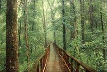 Travel Bug / Hiking/Camping/Nature/Travel