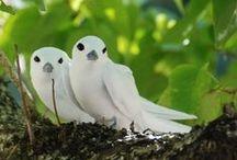 Birds / by Jasminka J