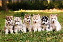 Furry friends / So cute, so funny / by Emma Bickerton