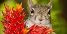 Dieren: Eekhoorns / Mooie foto's van eekhoorns
