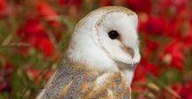 Dieren: Uilen / Mooie foto's van uilen