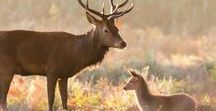 Dieren: Herten / Mooie foto's van herten