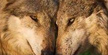 Awesome Wolves (Sahyáre Jheôr'i)