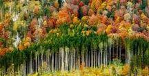Amazing Forests (Ôhymásh Lhavôn'i)