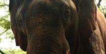 Beautyful Elephants (Yèle Naruáth'i)