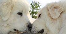 Amazing Dogs (Ôhymásh Khélu'e)