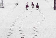 Winter Wonderland / Christmas, Snow, Beauty, Peaceful