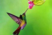 Hummingbirds and Dragonflies
