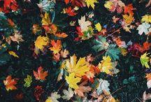 •Fall• / ~Inspirations~