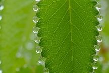 Green / by Diane Dumbacher