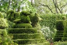 Topiary Magic