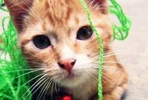 felinekisser / i want to hug you, i want to hug you all.