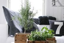 home | design  / by Jessica Mercer