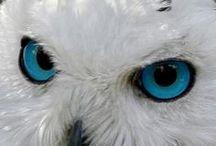 PRECIOUS OWLS/HOUSES / by Denise K