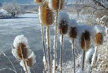 winter törröttäjät